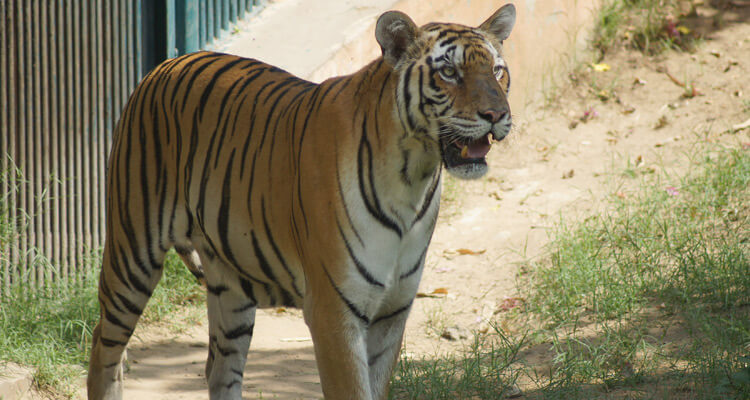 Image result for Jaipur zoo Baghjaipur